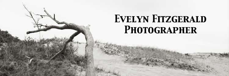 Evelyn Fitzgerald, Photographer